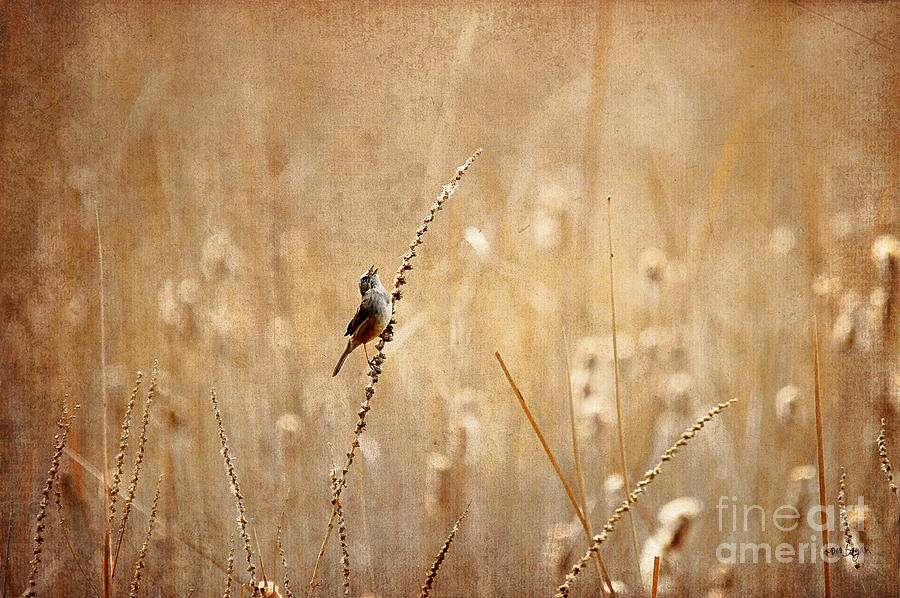 Bird Photograph - All Rejoicing by Lois Bryan