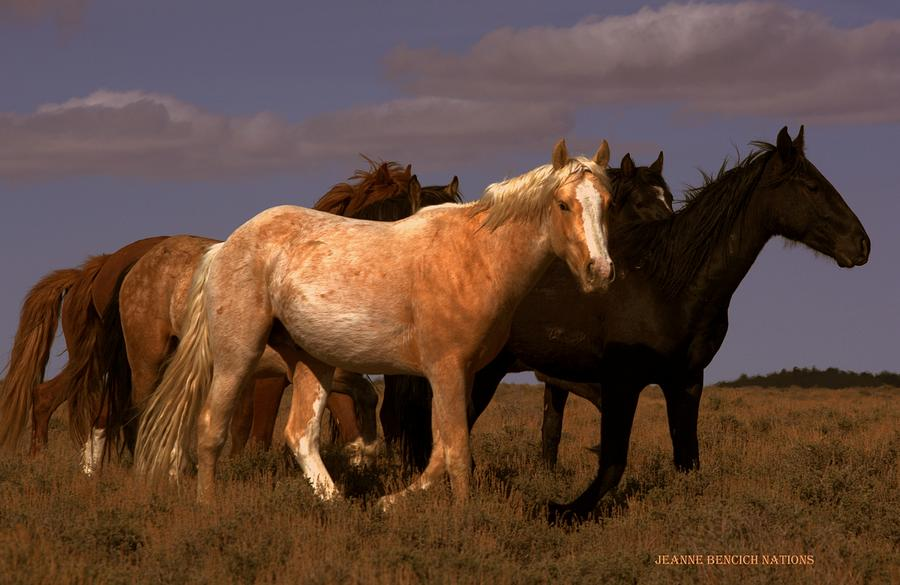 Wild Horses Photograph - All The Pretty Horses  by Jeanne  Bencich-Nations