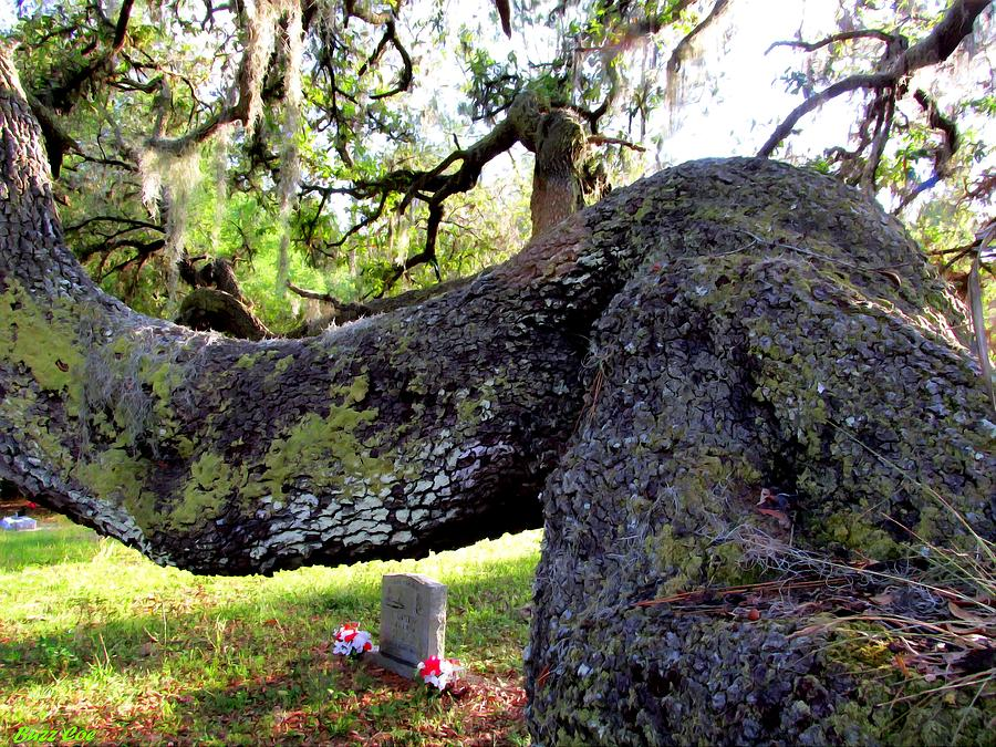 Cemetery Photograph - All Things Must Pass by Buzz  Coe