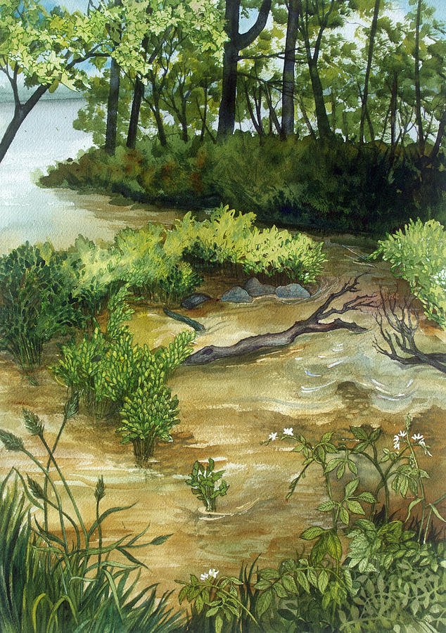 Plein Air Painting - Allequash Creek On Trout Lake by Helen Klebesadel