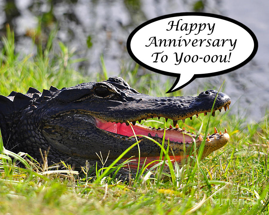 Anniversary Photograph - Alligator Anniversary Card by Al Powell Photography USA