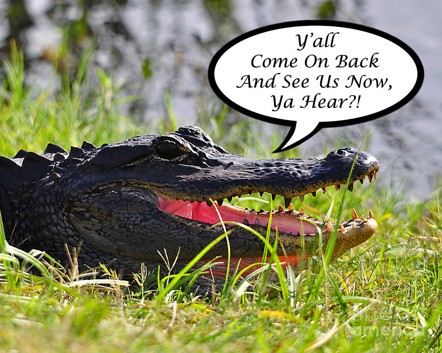 Alligator Photograph - Alligator Yall Come Back Card by Al Powell Photography USA