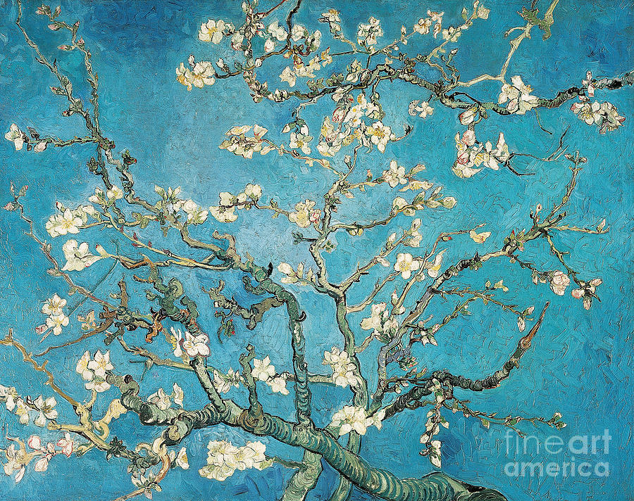 Van Painting - Almond Branches In Bloom by Vincent van Gogh
