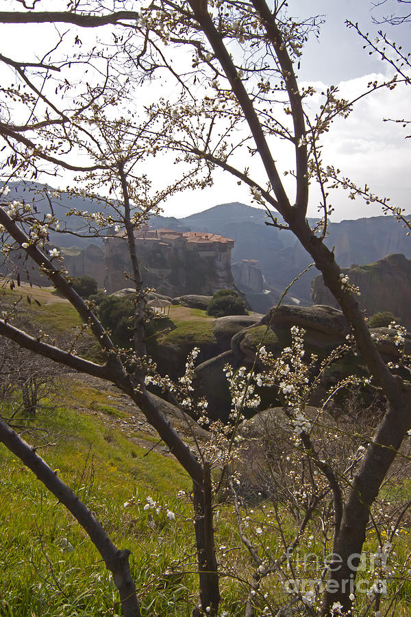 Almond Tree Photograph - Almond Tree And Monastery   #9815 by J L Woody Wooden
