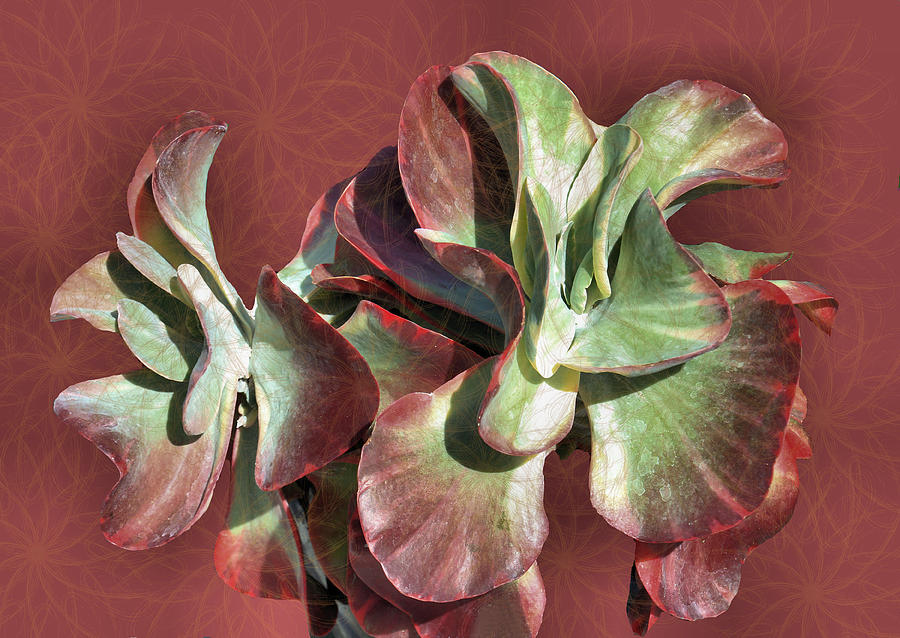 Plant Photograph - Aloe Design by Rosalie Scanlon