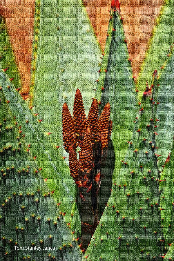 Aloe Digital Art - Aloe Veras New Buds by Tom Janca