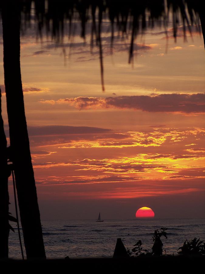 Aloha Photograph - Aloha by Karen Wiles