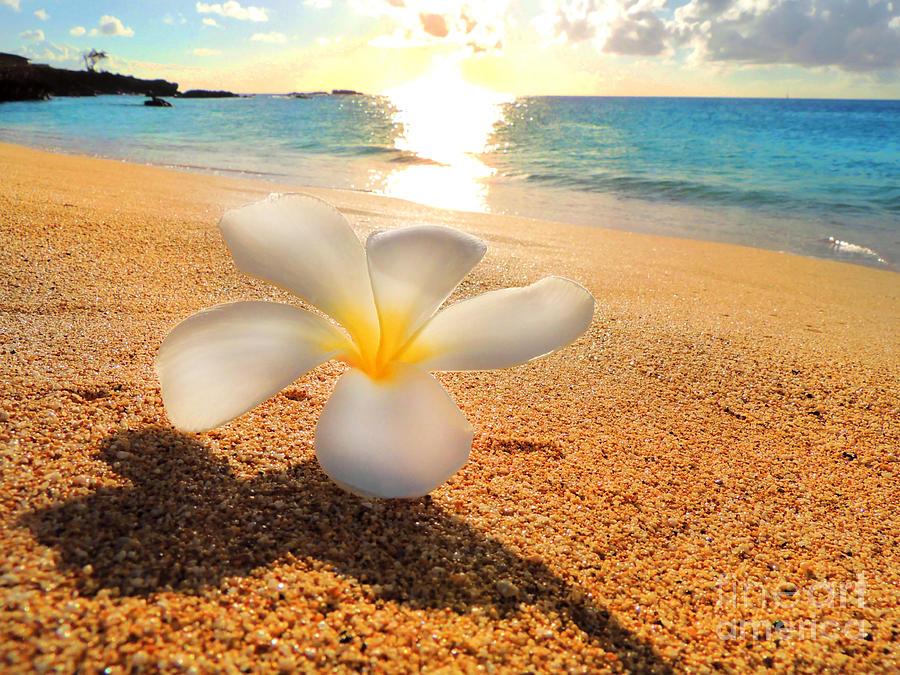 Aloha Paradise Photograph