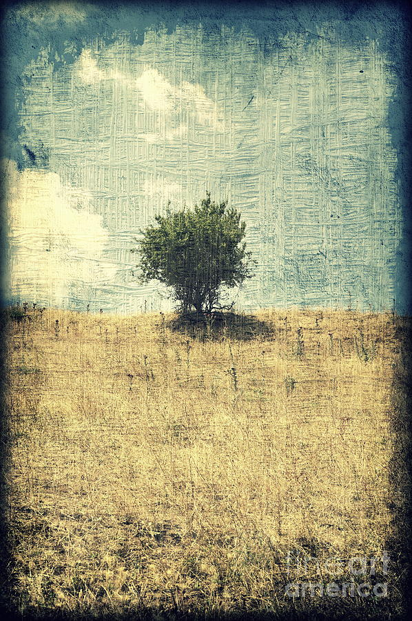 Tree Photograph - Alone In The Center by Ioanna Papanikolaou