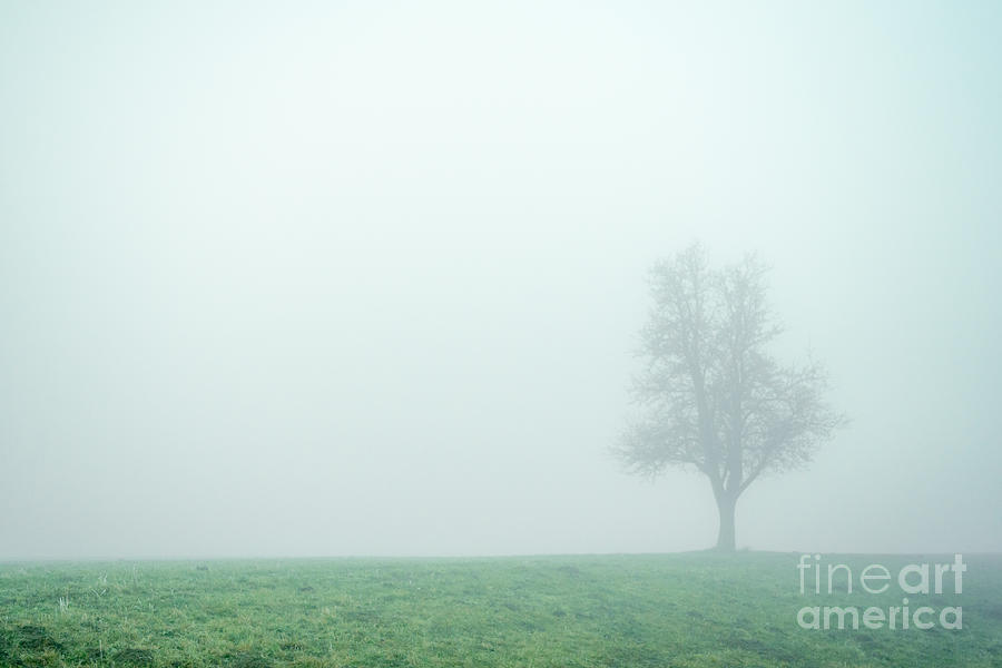 Austria Photograph - Alone In The Fog - Green by Hannes Cmarits