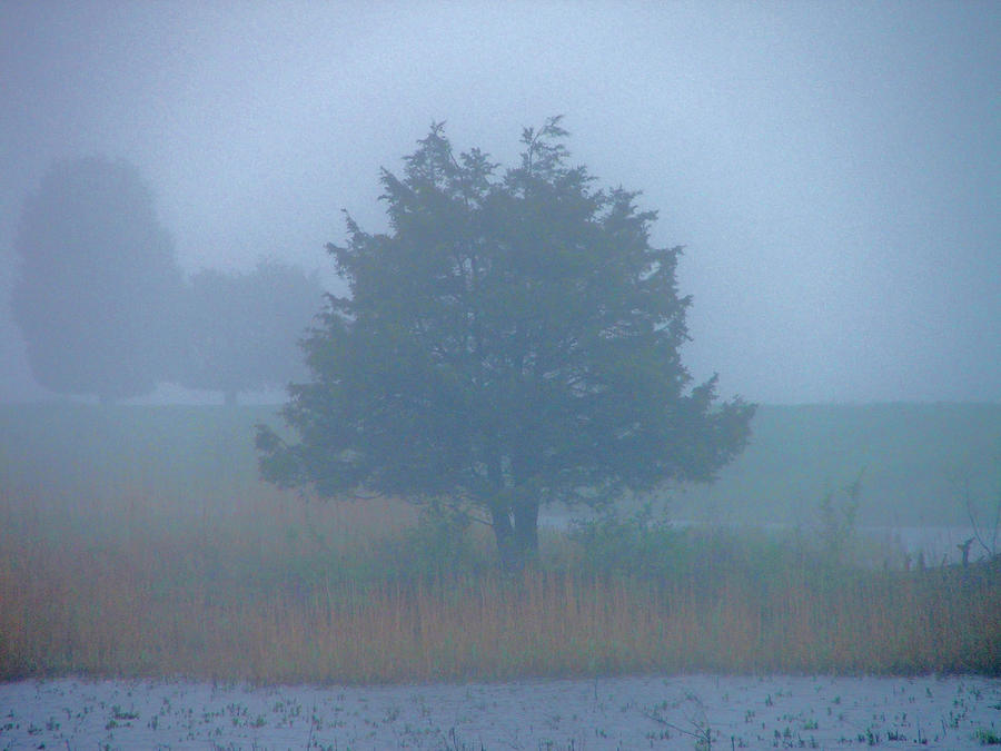 Fog Photograph - Alone In The Fog by Nancy Landry