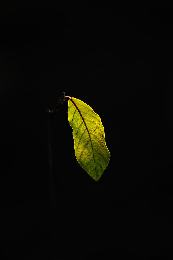 Leaf Photograph - Alone In The Forest by James Hammen