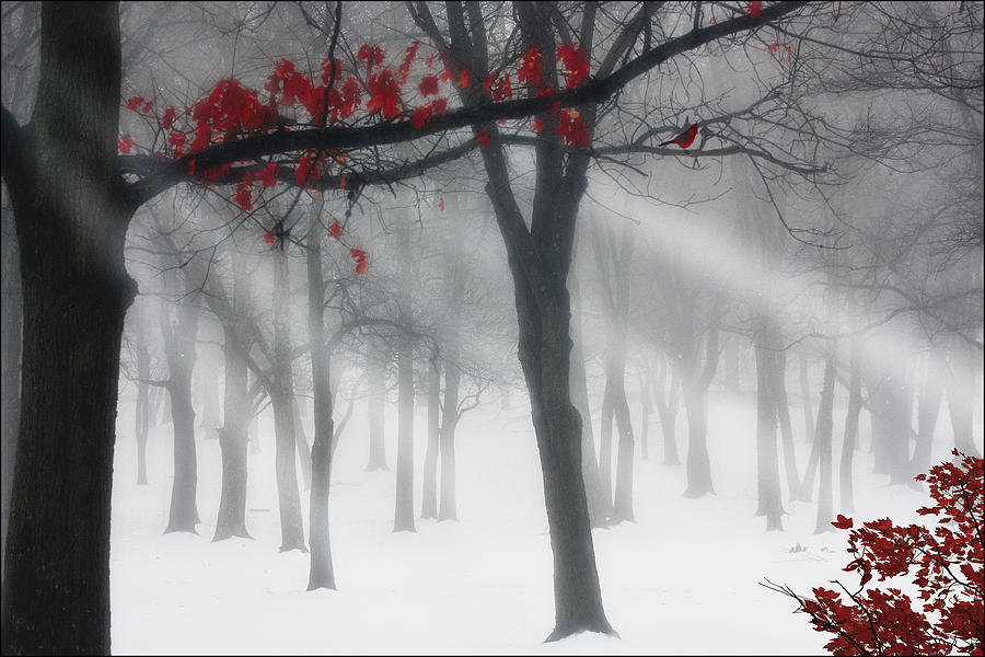 Winter Photograph - Alone In The Forest by Tom York Images