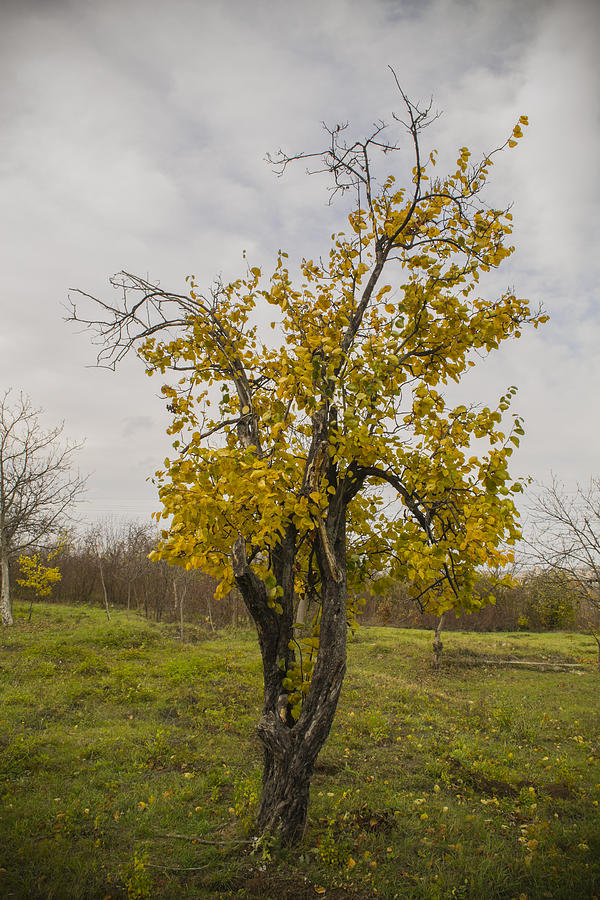 Autumn Photograph - Alone In The Woods by Georgi Dimitrov