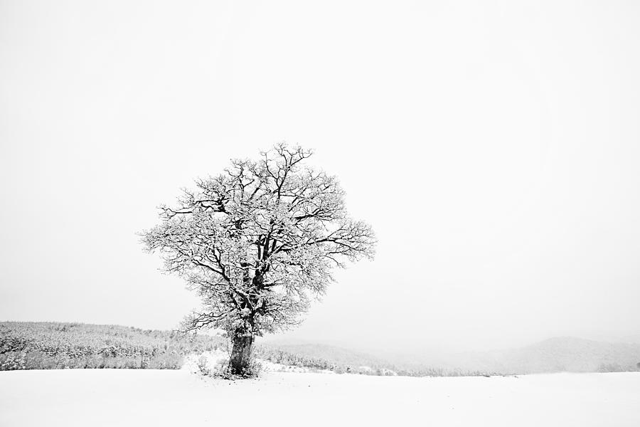 Background Photograph - Alone In Winter by Svetoslav Sokolov