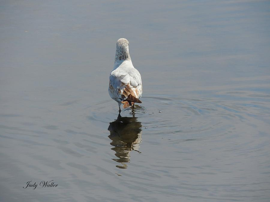 Pond Photograph - Alone by Judy  Waller