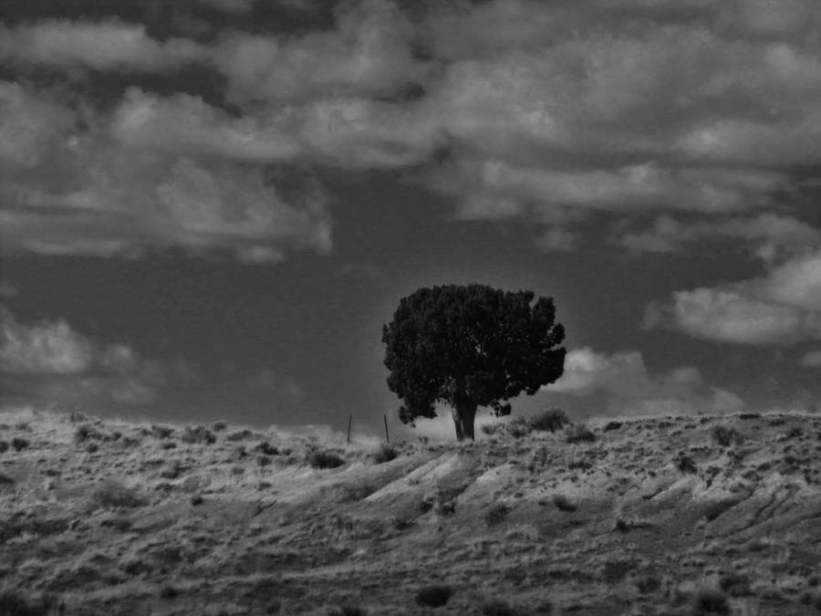 Landscape Photograph - Alone On The Ridge by Rob Hallifax