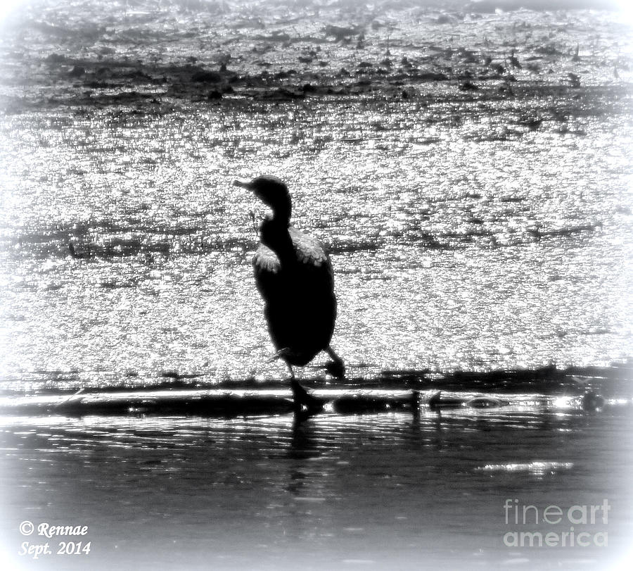Birds Photograph - Alone Time by Rennae Christman