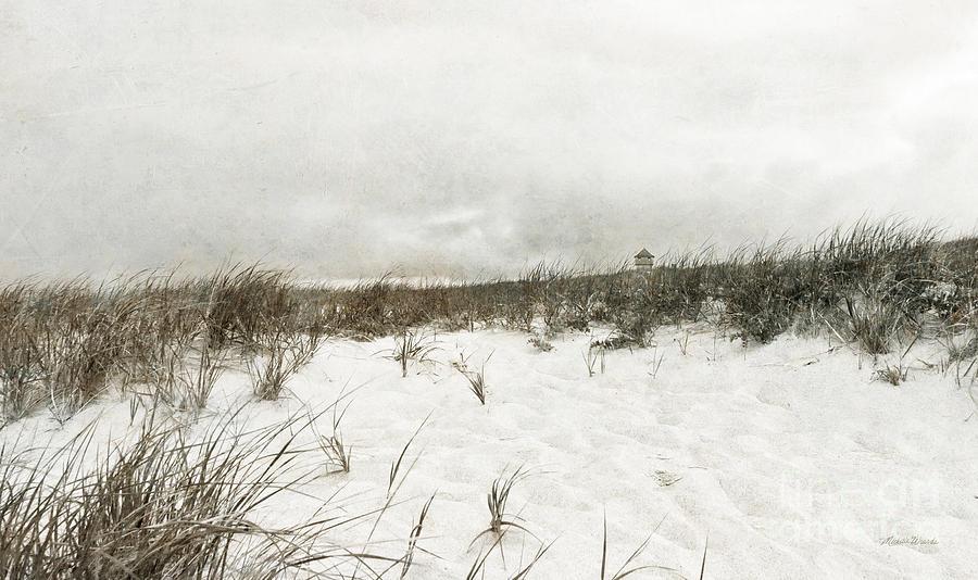 Landscape Photograph - Along The Cape Cod National Seashore by Michelle Wiarda