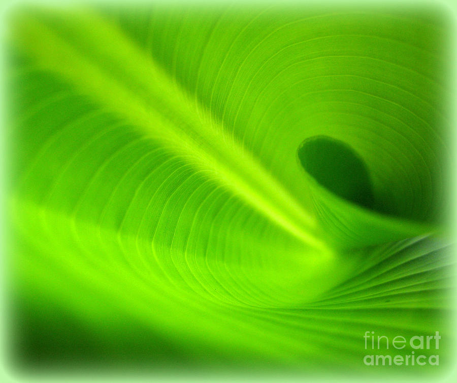 Leaf Photograph - Along The Curve by C Ray  Roth