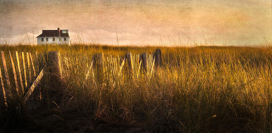 Cape Cod Photograph - Along The Fence by Bill Wakeley