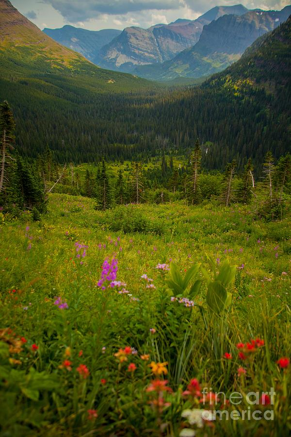 Glacier National Park Photograph - Along The Path To Iceburg Lake 17 by Natural Focal Point Photography