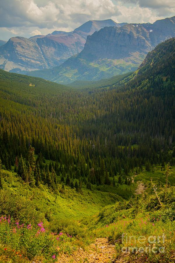 Glacier National Park Photograph - Along The Path To Iceburg Lake 19 by Natural Focal Point Photography