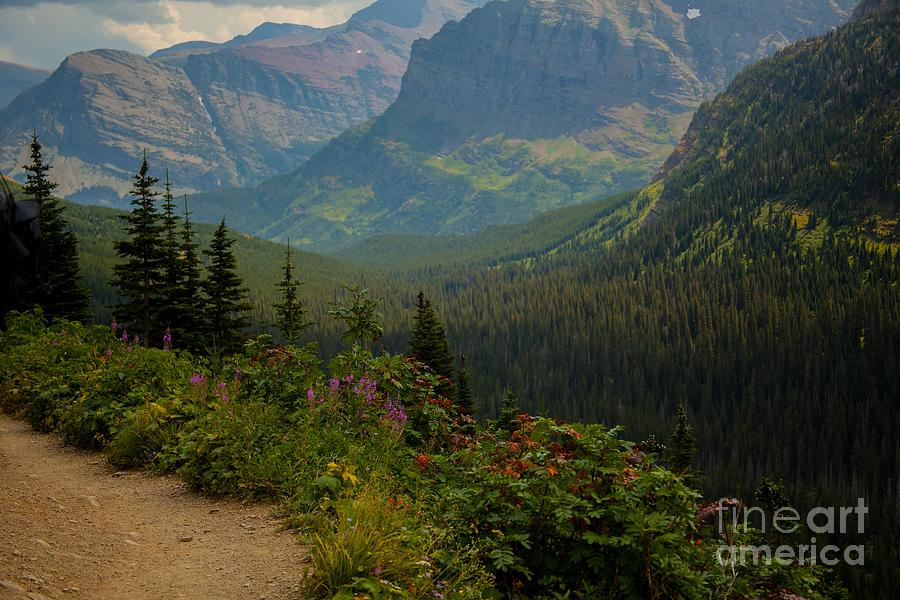 Glacier National Park Photograph - Along The Path To Iceburg Lake 21 by Natural Focal Point Photography