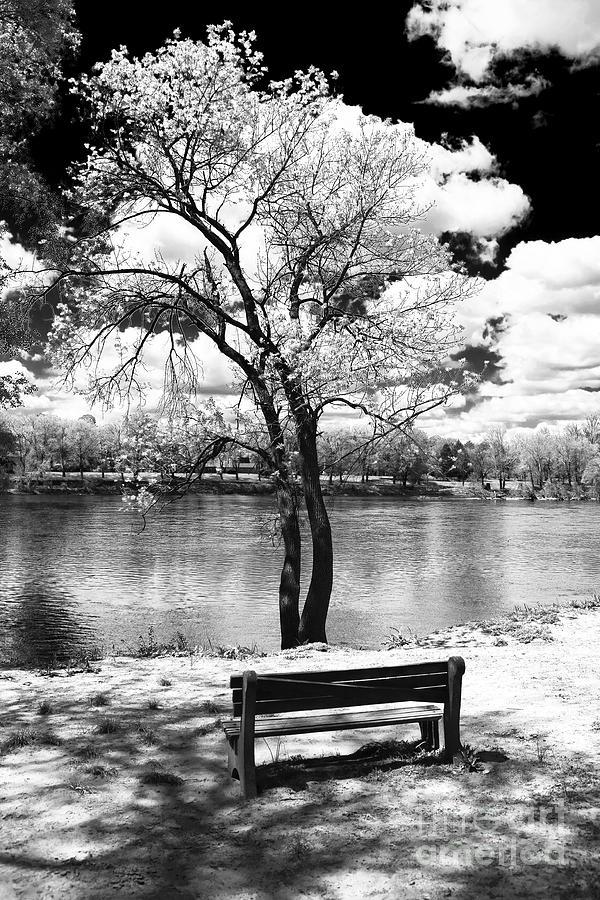 River Photograph - Along The River by John Rizzuto