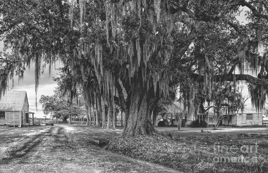 Black Photograph - Along The River Road Near Vacherie La by Kathleen K Parker