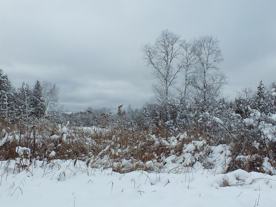 Heavy Snow Photograph - Along The Trail by Gene Cyr