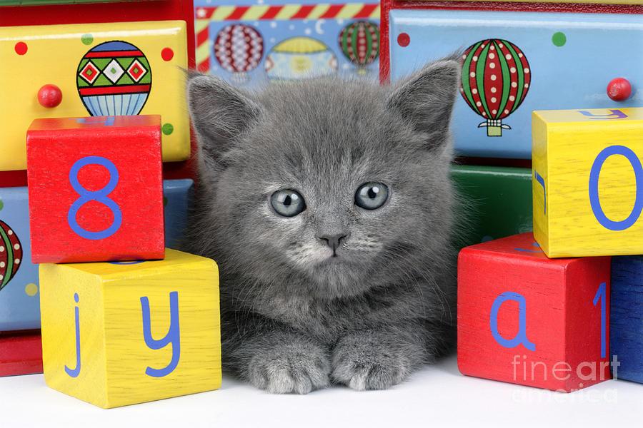 Kitten Digital Art - Alphabet Cat Ck415 by Greg Cuddiford