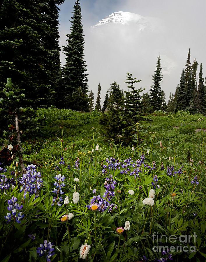 Alpine Beauty Photograph