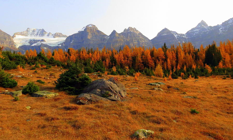 Panoramic Photograph - Alpine Larch Meadow by Ramona Johnston