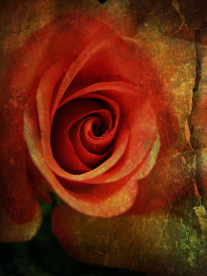 Rose Photograph - Always Be My Dream by Shirley Sirois