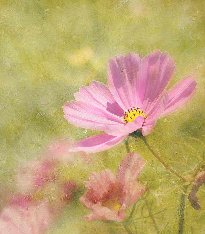 Flower Photograph - Always by Kim Hojnacki