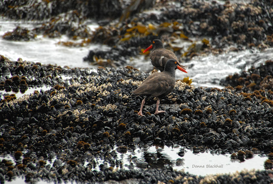 Coast Photograph - Always Walking On Shells With You by Donna Blackhall