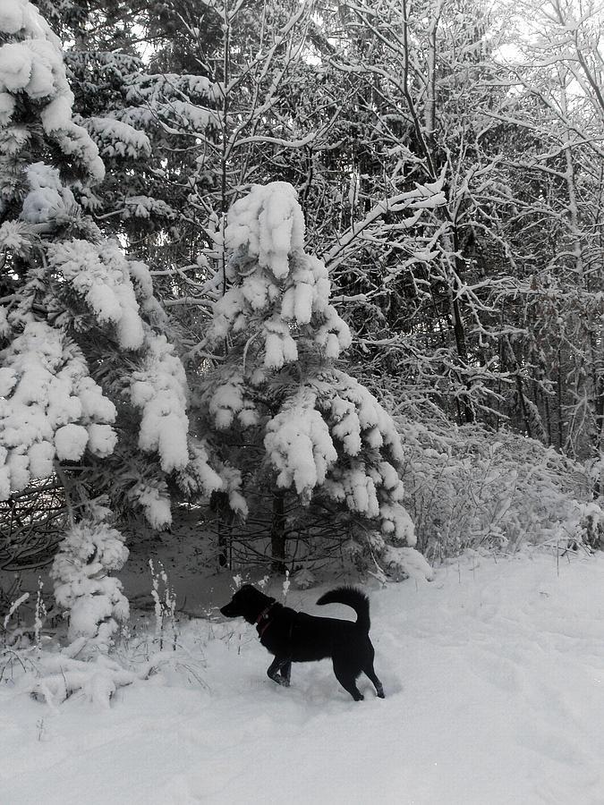 Winter Photograph - Always Watchful by Teresa Schomig