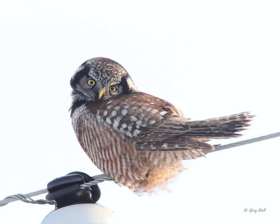 Nature Photograph - Am I Cute by Gerry Sibell