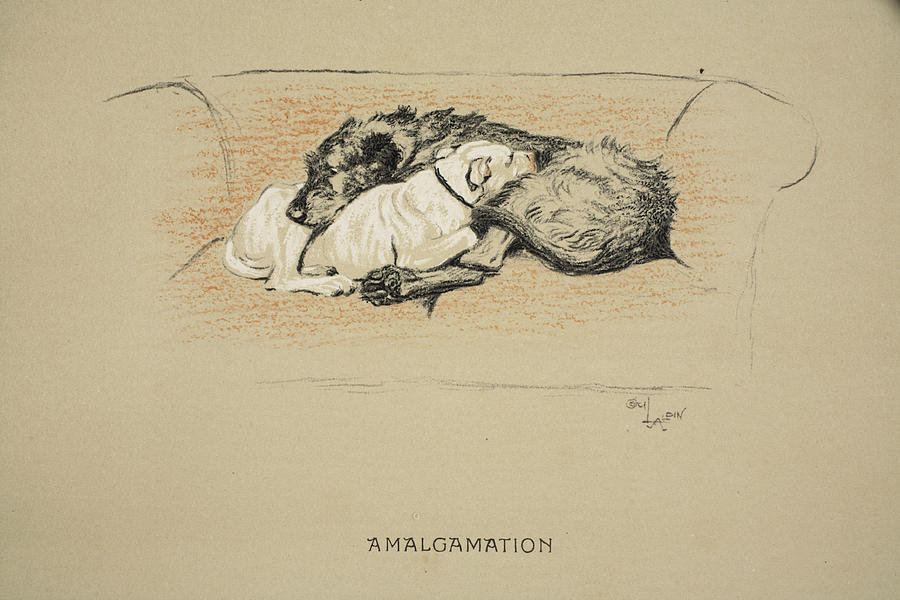 Dogs Drawing - Amalgamation, 1930, 1st Edition by Cecil Charles Windsor Aldin