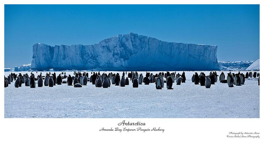 Antarctic Landscape Photograph - Amanda Bay Rookery by David Barringhaus