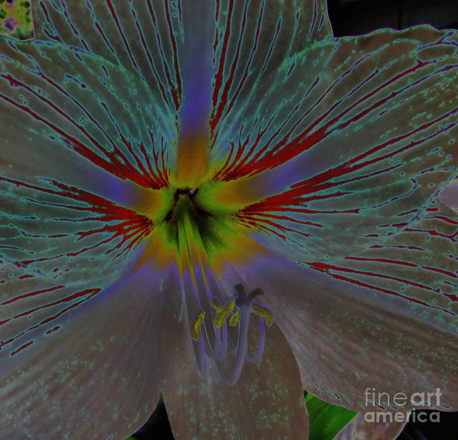 Flower Digital Art - Amaryllis Colors by D Hackett