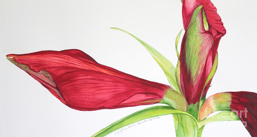 Flower Painting - Amaryllis by Kyong Burke
