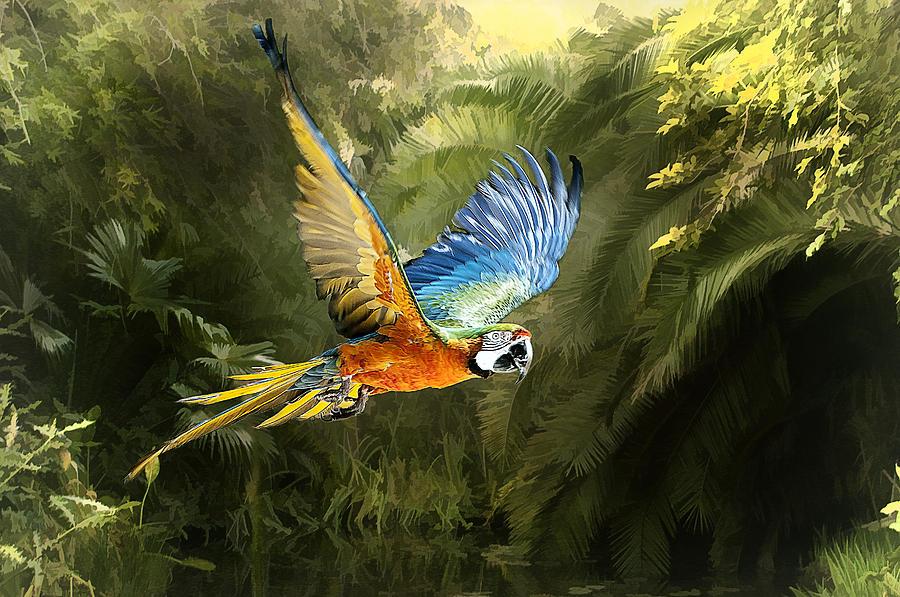 Amazon Beauty Photograph