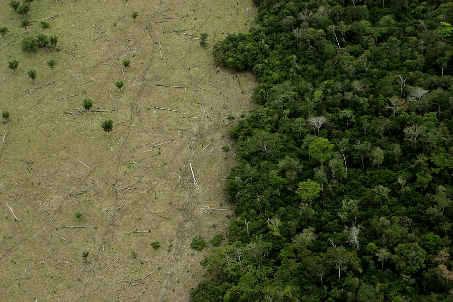 Amazon Deforestation for Cattle Photograph by LeoFFreitas