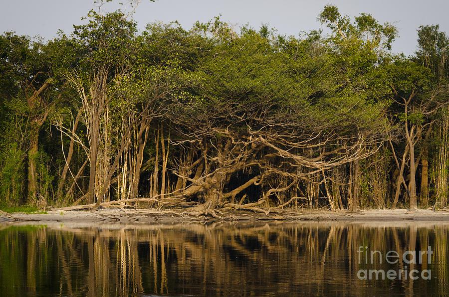 Brasil Photograph - Amazon Trees by Ricardo Lisboa