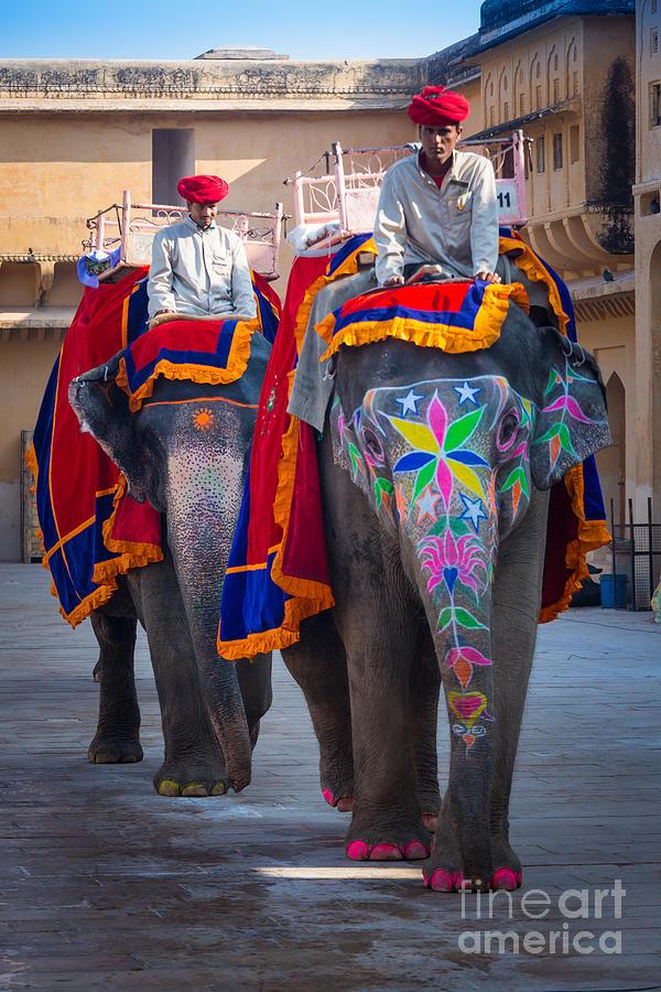 Amber Fort Elephants Photograph