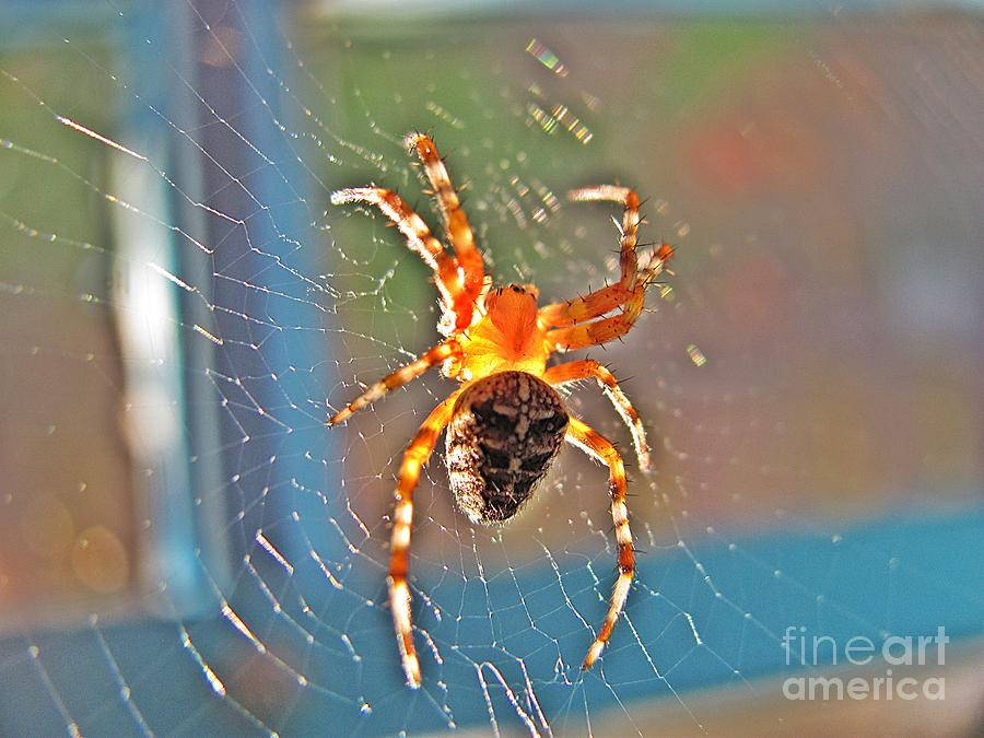Spider Photograph - Amber Thing by Halyna  Yarova