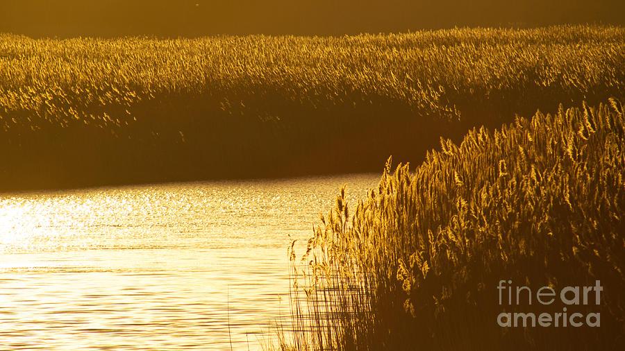 Marsh Photograph - Amber Waves by Joe Geraci