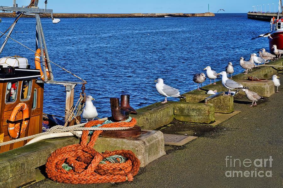 Amble Photograph - Amble Quayside by Les Bell